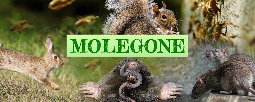 molegone-cover-image